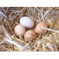 Huevos de Gallinas Libres 12 Unidades